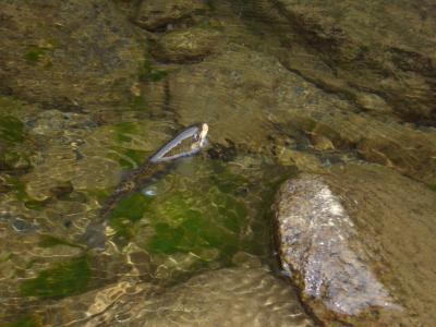 08-9渓流釣り 017