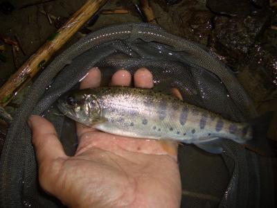 08-9渓流釣り 021