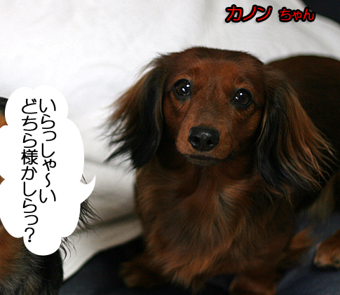 IMG_45041.jpg