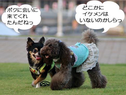 IMG_50955.jpg