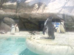 ガラスの向こうのペンギンたち
