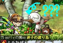 Maple0001_20090429222146.jpg