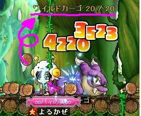 Maple0002_20090212225602.jpg
