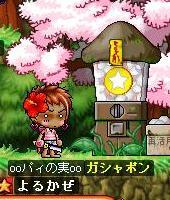 Maple0003_20090528213345.jpg