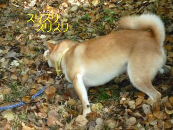 P1010505_convert_20090905142202ブログ