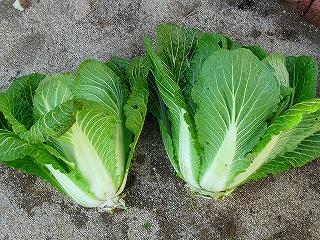 白菜4H20.2.10