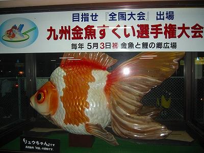 金魚H20.10.19