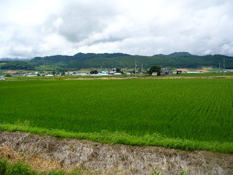 学田付近の田園風景