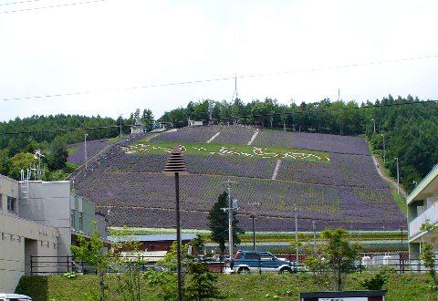 中富良野のラベンダー畑