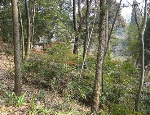 東海の森,東山公園 063