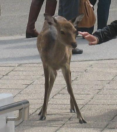 IMG_0665鹿