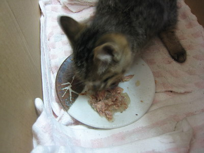 IMG_0400子猫