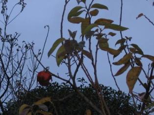 2007-11-10柿