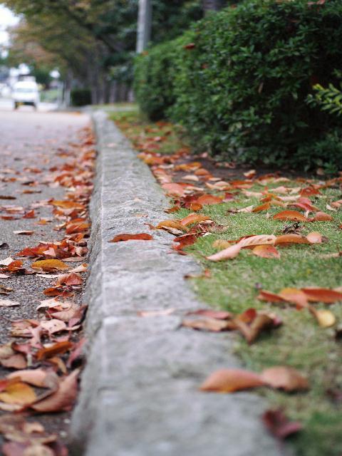 2008年11月08日_PICT0276