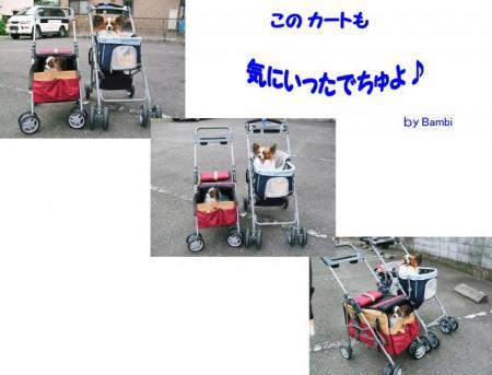 4825_convert_20080920212551.jpg