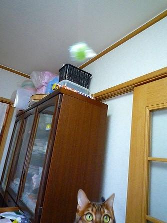 s-20090301 024