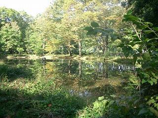 カワセミの池