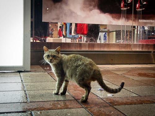 外猫in台湾002