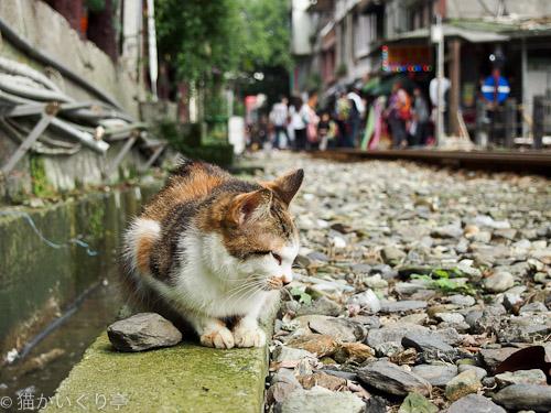 外猫in台湾003