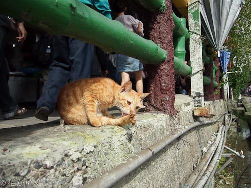 外猫in台湾004