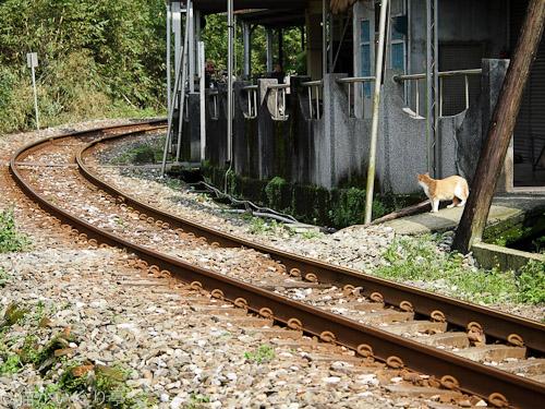 外猫in台湾005