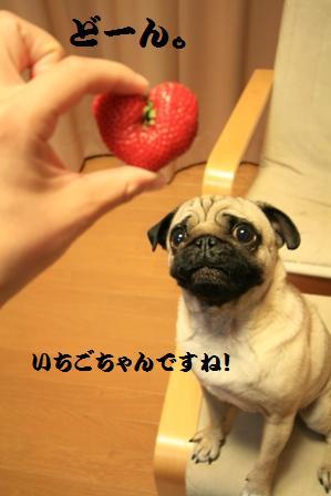 苺ちゃん3