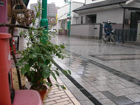 10.2雨 002