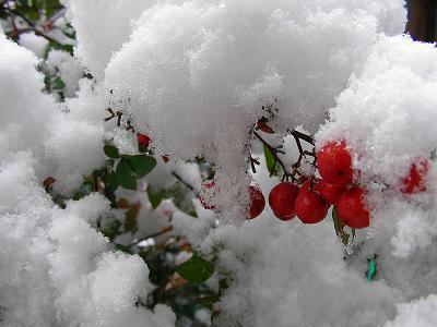 31日雪 010