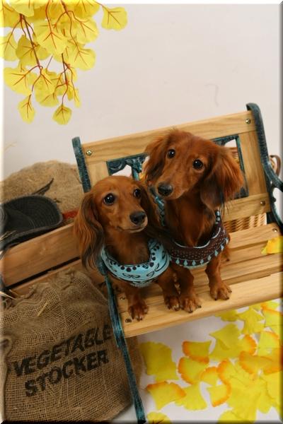 Cherie&Meg