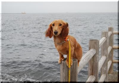 海とユズくん