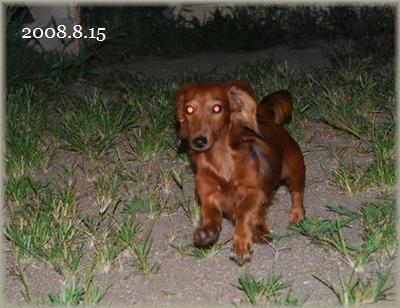 2008.8.15