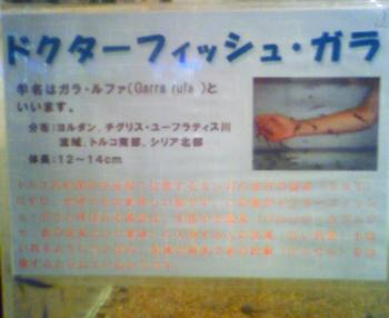 14_20090501213202.jpg