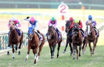 20081228-00000502-sanspo-horse-view-000.jpg
