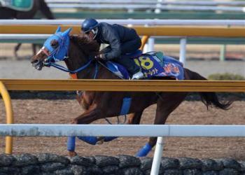 20090212-00000500-sanspo-horse-view-000.jpg