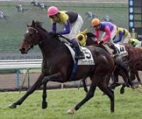 20090215-00000000-nks-horse-thum-000.jpg