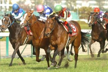 20090405-00000010-kiba-horse-view-000.jpg