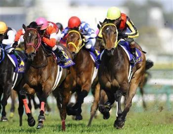 20090412-00000512-sanspo-horse-view-000.jpg