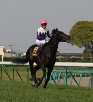 20090419-00000022-spnavi-horse-view-000.jpg