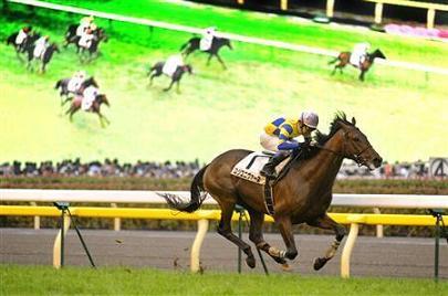 20090531-00000509-sanspo-horse-view-000.jpg