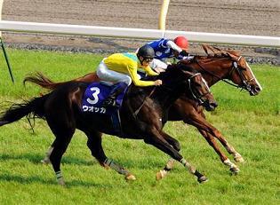 20090607-00000507-sanspo-horse-view-000.jpg