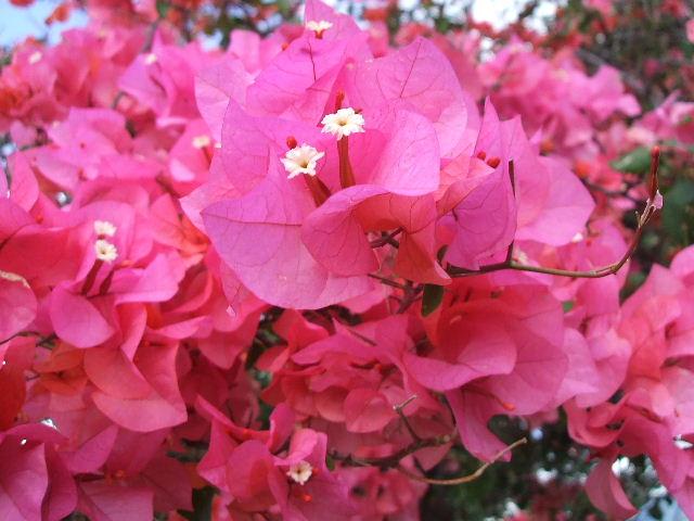 2008_0413hawaii0132.jpg