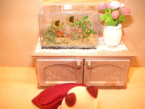 水槽とアライグマ