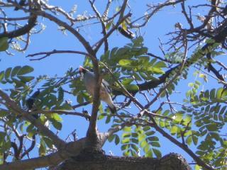 ハワイの文鳥サン2