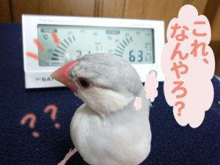 温湿度計と夢之介