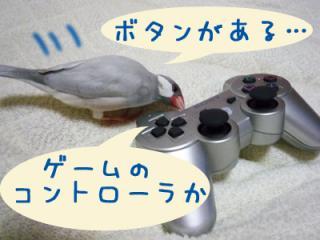 yume_hina70.jpg