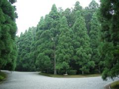多摩陵と武蔵野陵の分かれ目