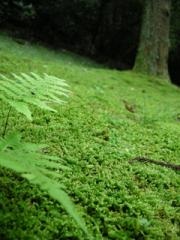 参道の苔1