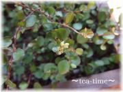 tea0617 002-01