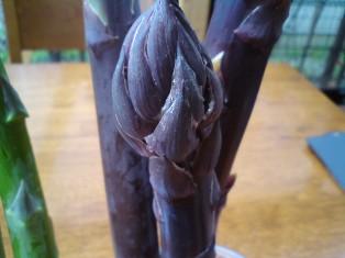 紫のアスパラガス