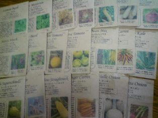 いろいろな野菜たちの種